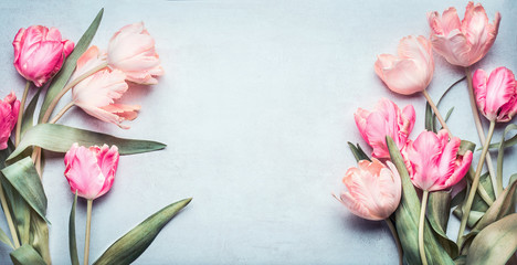 Beautiful tulips in pink pastel color on light blue background, top view, frame, border. Lovely...