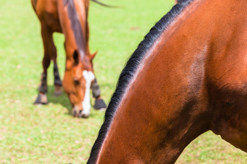 Horses Nrck Mange Outdoors