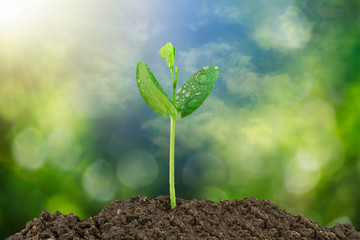 Sprout growing from soil on blurred green bokeh and sky background, environmental concept