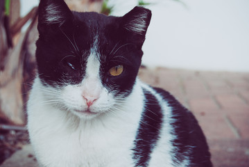 One eye street cat