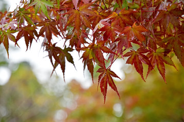 Leaves are going to change colors by season.
