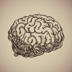 Brain engraving. Human body. Illustration in sketch style.