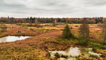 Białowieża-Urwald im Herbst
