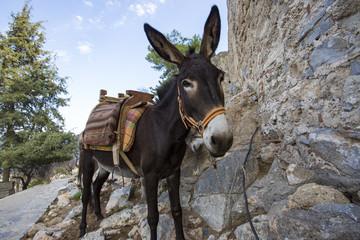 Yunan Adasında Katır Ve Eşek