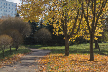 road in a park among trees in autumn