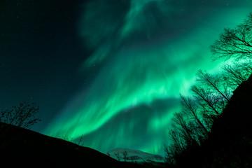 Amazing Aurora Borealis in North Norway above Tromsdalstinden mountain, Tromso City,