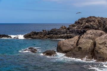 Eine Möwe fliegt über die felsige Küste am Meer