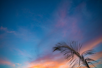 Wall Mural - Sunset sky and silhouette of palm branch
