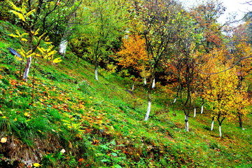 Autumn color in Saint Ana-Rohia Monastery. Typical rural landscape in the forests of Transylvania, Romania