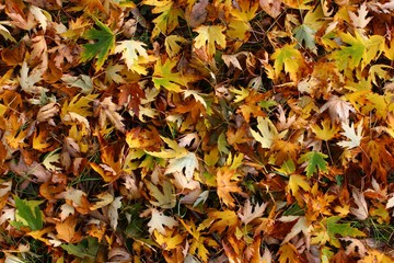 photo texture the ground in autumn forest