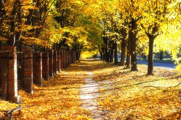 Beautiful road in Golden autumn
