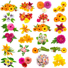 Flowers collection of roses, dahlia, lilies, chamomiles, hibiscus, chrysanthemum, yarrow, pansy, calendula and others isolated on white background. St. Valentine's Day. Easter. Flat lay, top view