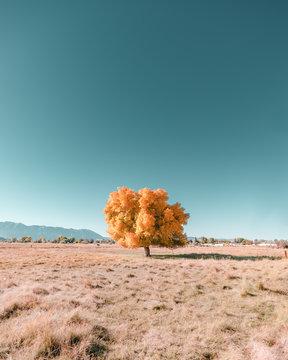 Single autumn tree on landscape against blue sky