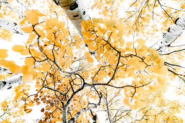 Up Angle with Fall Colors and Branches