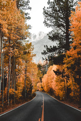 Orange And Yellow Autumn Road