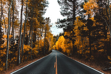 Scenic view of road amidst autumn tree