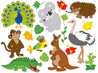 Vector Set of Australian Animals