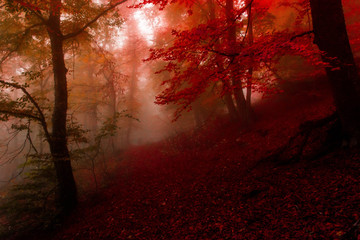 autumn forest 11