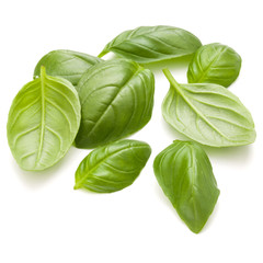 Fototapete - Sweet basil herb leaves handful isolated on white background closeup