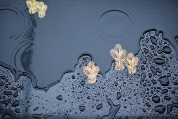 和風背景素材、黒い漆器、金の松の模様、雨の滴