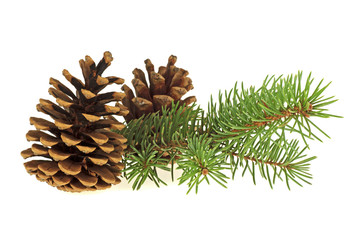 Two pine cones and fir branch on a white background