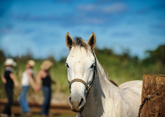 White horse portrait with three cowgirls rejoicing in the background