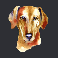Azawak Greyhound. Watercolor hand drawn illustration on black background.
