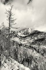Spruce forest after natural disaster in High Tatras mountains, colorless