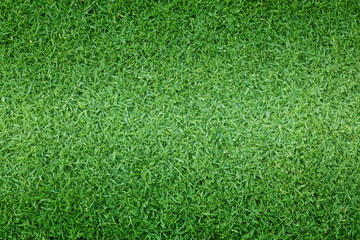 Tuinposter Gras grass background Golf Courses green lawn