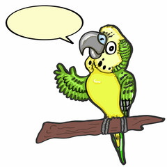 cute budgerigar and speaking