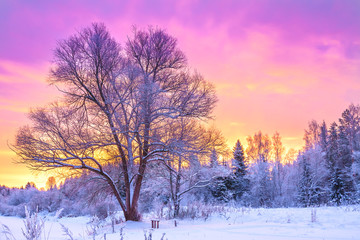 winter landscape with forest, trees and sunrise
