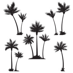 Tropical palm trees, black silhouettes.