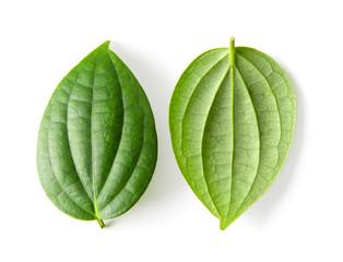 leaf on white background