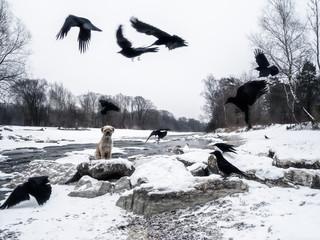 isar winter