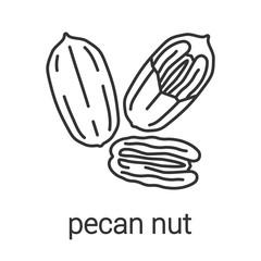 Pecan nut linear icon