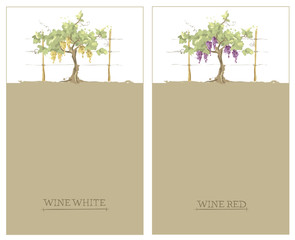 Label for red and white wine -- set / Vector illustration, floral design element, watercolor