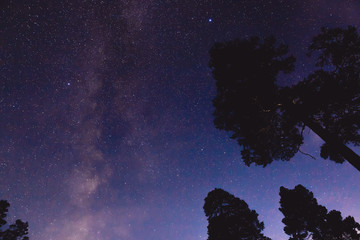 The Milky Way and some trees in the mountains
