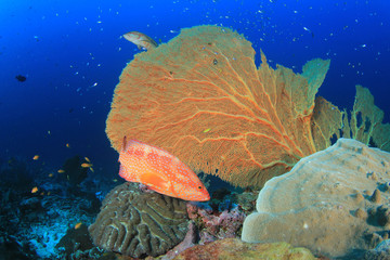 Underwater coral reef and tropical fish in ocean