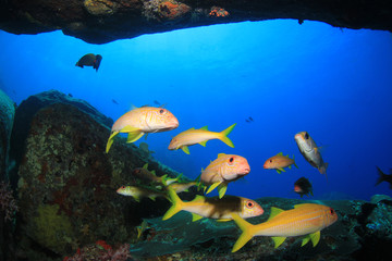 Underwater coral reef and tropical fish in ocean