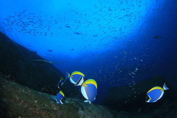 Underwater fish on coral reef in ocean