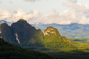 tropical rainforest in thailand.
