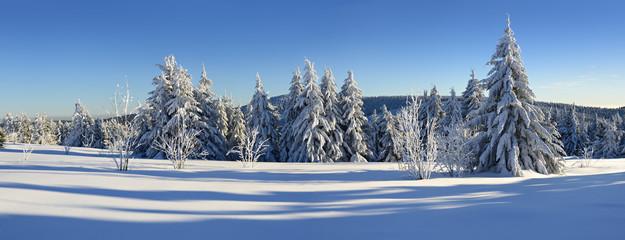 Tief verschneite unberührte Winterlandschaft, schneebedeckte Tannen, blauer Himmel, Sonnenschein