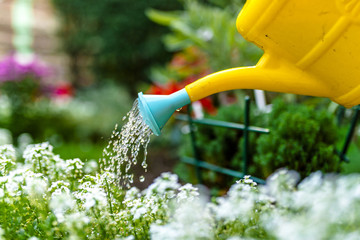 Woman watering plants outside in summer. Young woman working in the garden