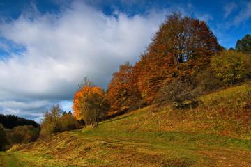 Landschaft im Herbst mit Wiesen und bunten Bäumen in idyllischer Natur in der Eifel