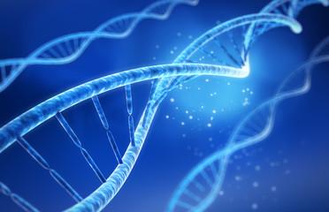 DNA-Modell