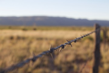 Focused in view of single barb in barbed wire