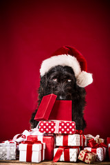 Black dog in santa cap