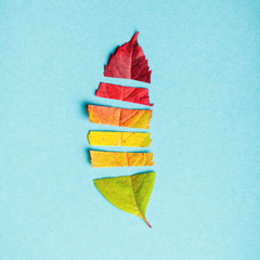 Creative layout of colorful autumn leaves, season concept, gradient of warm shades