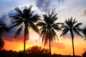 silhouette of palm at sunset