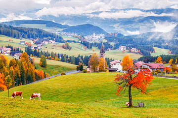 Wall Mural - Breathtaking picturesque autumn scenery of valley with meadows and cows grazing grass in Dolomite mountains. Italy, Europe, Dolomite Alps.